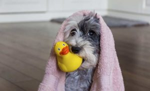 4 Pet-Friendly Activities to Stay Sane During Quarantine