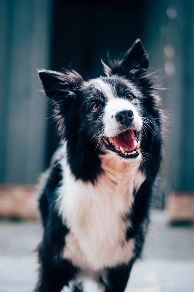 Looking for an ESA? Here's Why a Dog is Your Best Bet