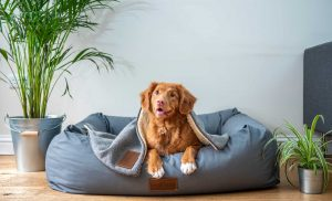 Getting a Dog? It's More Work Than You Think